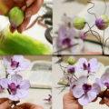 orhidei-gotovo